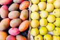 Mangos and quinces at market diptych of as background texture Royalty Free Stock Image