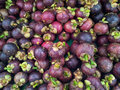 Mangosteen on display the purple garcinia mangostana colloquially known simply as the is a tropical evergreen tree believed to Stock Image