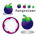 Mangosteen mangosteesn vector on white background Royalty Free Stock Photography