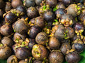 Mangosteen tropical fruit in a pile for sale Royalty Free Stock Photo