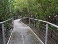 Mangrove boardwalk, East Point Reserve, Darwin, Australia