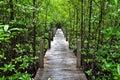 Mangrove forest boardwalk