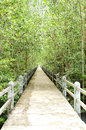 Mangrove forest conservation concrete bridge on the area Royalty Free Stock Image