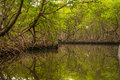 Mangrove forest in the dominican republic Royalty Free Stock Photos