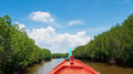 Mangrove forest with fishing boat Stock Images