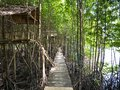 Mangrove Forest with Mangrove Bridge and Hut Royalty Free Stock Photo