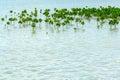 Mangrove forest planting som förhindrar kustlinjekorrosion Arkivbilder