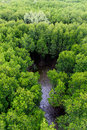 Mangrove forest in Thailand Stock Images