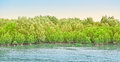 Mangrove forests at chonburi thailand Royalty Free Stock Images