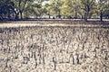 Mangrove Swamp Royalty Free Stock Photo