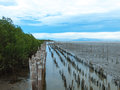 Mangrove tree forest at bang pu of samutprakarn thailand Stock Photos