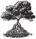 Mangrove Tree Ink Style Vector Cartoon Illustration Royalty Free Stock Photo