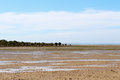 Mangroves on the beach at low tide in port clinton yorke peninsula in south australia looking out gulf st vincent Royalty Free Stock Photography