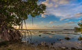 Mangroves drip into water off Key Largo, Florida near sunset Royalty Free Stock Photo