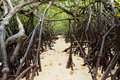 In the mangroves el nido philippines on sand palawan Royalty Free Stock Photo