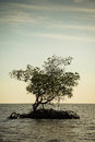 Mangroves in florida the everglades Royalty Free Stock Photo