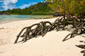 Mangroves at low tide seychelles Royalty Free Stock Photography