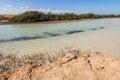 Mangroves in ras mohamed national park the of mohammed sharm el sheikh Stock Photos