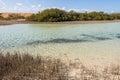 Mangroves in ras mohamed national park the mohammed sinai egypt Stock Image