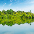 Mangroves and sky a blue Stock Image