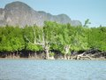Mangroves in thailand west of phang nga Stock Photos