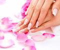 Manicure woman hands closeup and spa beautiful Royalty Free Stock Image