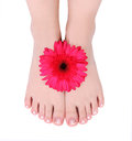Manicured feet and red gerber flower Stock Photos