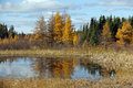 Manitoba Fall Reflection Royalty Free Stock Photo