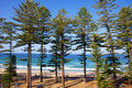 Manly beach australia in new south wales a surfing suburb in sydney Stock Images