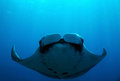 Manta ray pacific birostris caño island costa rica Royalty Free Stock Images