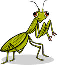 Mantis insect cartoon illustration of funny character Stock Image