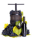 Manual grape pressing utensil with red wine traditional and blue bunch Royalty Free Stock Photos