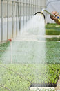 Manual irrigation Royalty Free Stock Image