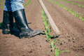 Manual labor in agriculture the Royalty Free Stock Photo