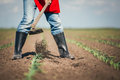 Manual labor in agriculture with blue sky Royalty Free Stock Photo