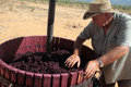 Manual organic wine making Stock Image