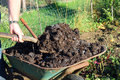 Manure being shovelled from a wheelbarrow closeup of hand holding shovel or spade and shovelling to enrich the soil and grow crops Royalty Free Stock Photos