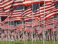 Many American Flags in the Grass Royalty Free Stock Photo