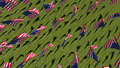 Many American flags in green field. Royalty Free Stock Photo