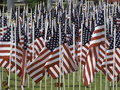 Many american flags planted in the grass Royalty Free Stock Photos