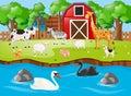 Many animals on the farmyard Royalty Free Stock Photo