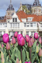 Many beautiful pink tulips with old european buildings as background Royalty Free Stock Photo
