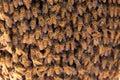 Many bees of bringing honey on honeycomb Stock Photos