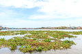Many birds feed on water hyacinth estuary Royalty Free Stock Images
