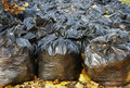 Many black garbage bags in autumn park Stock Image
