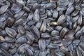 Many black roasted sunflower seeds Royalty Free Stock Photo
