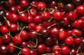 Many cherries Stock Photo
