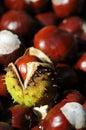 Many Chestnuts