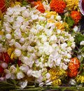 So many colorful flowers. Royalty Free Stock Photo