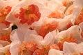 Many daffodils Royalty Free Stock Photo